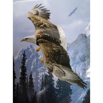 Couverture Doudou aigle en plein vol