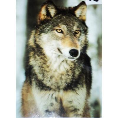 Couverture Doudou loup bois