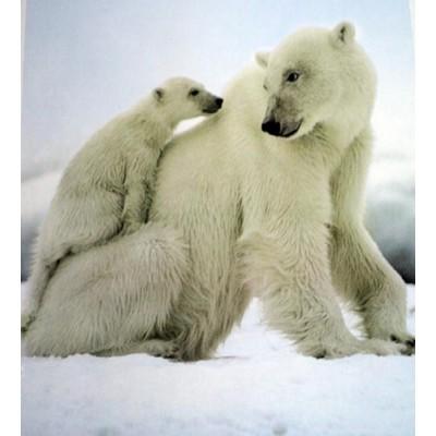 Couverture Doudou ours polaire